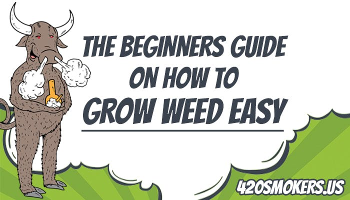 Bull taking smoking pot, how to grow weed easy