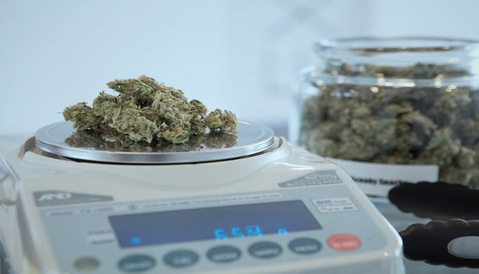 How many Grams in a Pound of Weed (In Record Time)