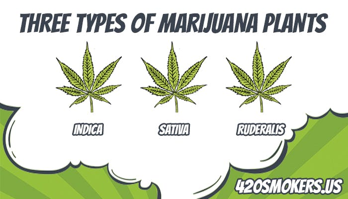 types of weed plant