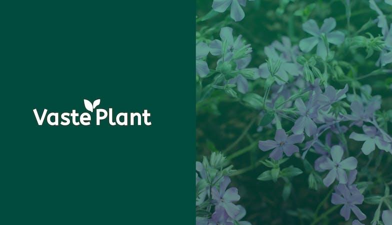 730 project afbeelding vaste plant