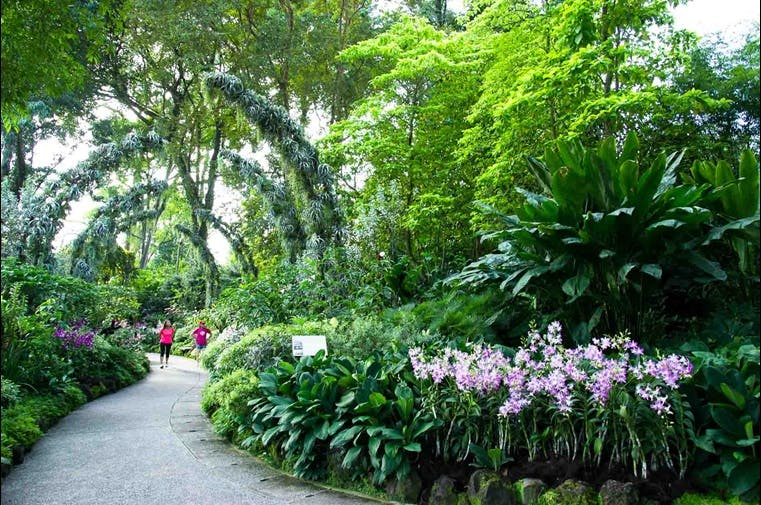 The gorgeous Silver Arches Display at National Orchird Garden is one of many attractions available at Singapore Botanic Gardens. Take a 6 minute drive or even walk from Park Nova to enjoy other lovely trails like this on your off days.