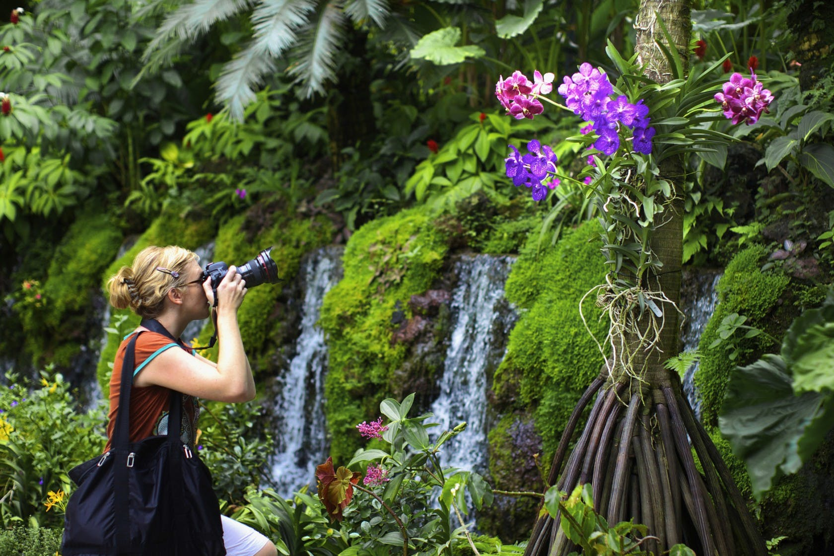 Beautiful orchirds at Singapore Botanic Gardens
