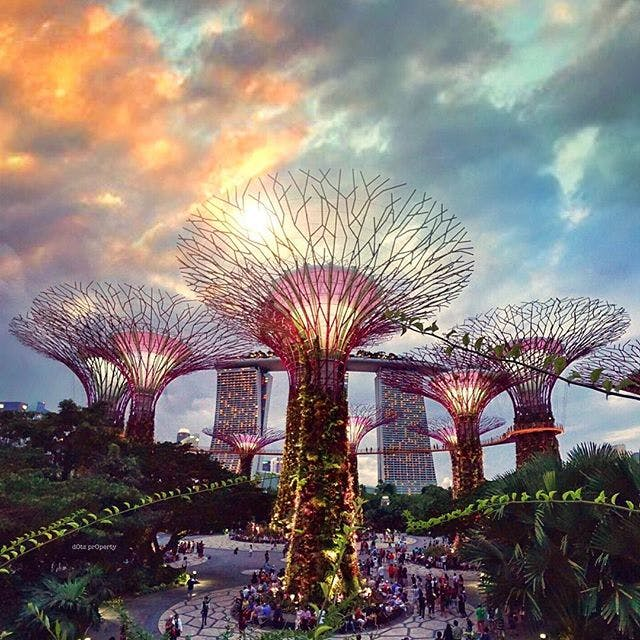 Take a stroll along Gardens by the Bay.