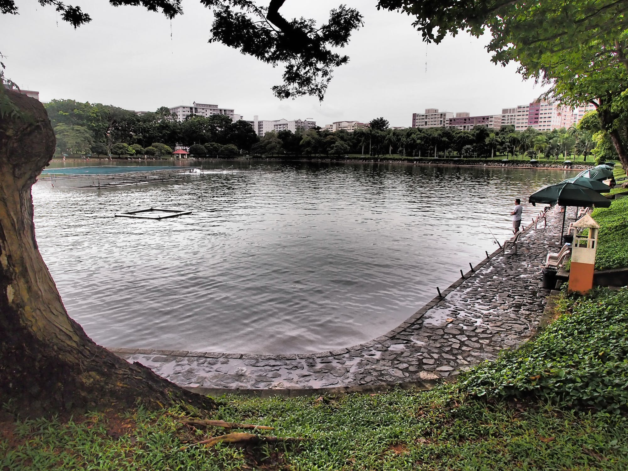 A man fishes at the marine pond of Pasir Ris Town Park