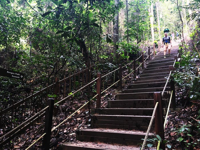 Take a leisure stroll at Bukit Timah Nature Reserve