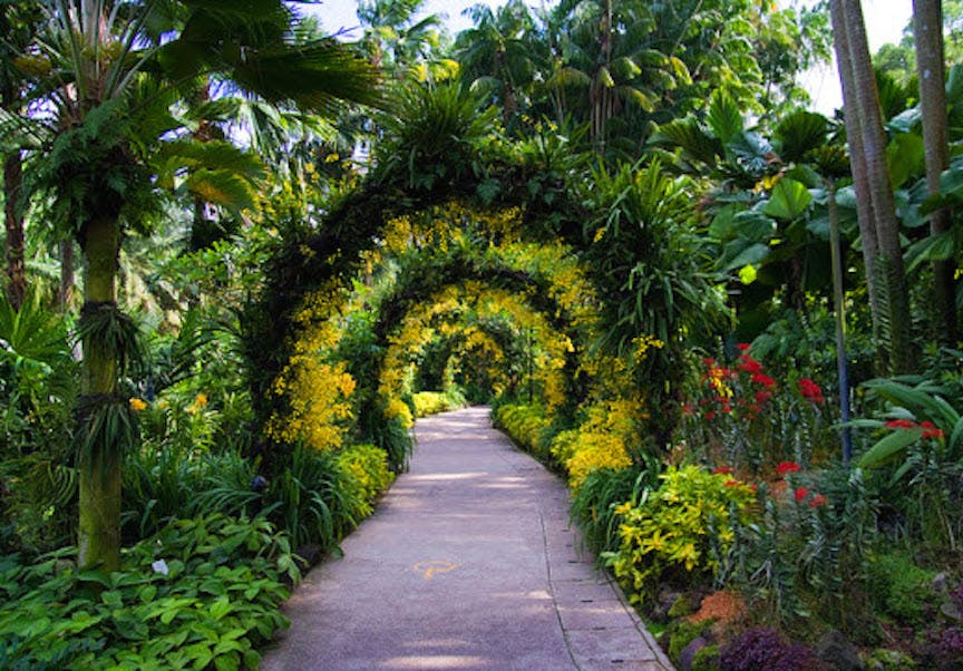 Archway made of the flora that can be found all across Singapore's Botanic Gardens