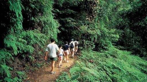 Bukit Timah Nature Reserve, near Verdale Condo