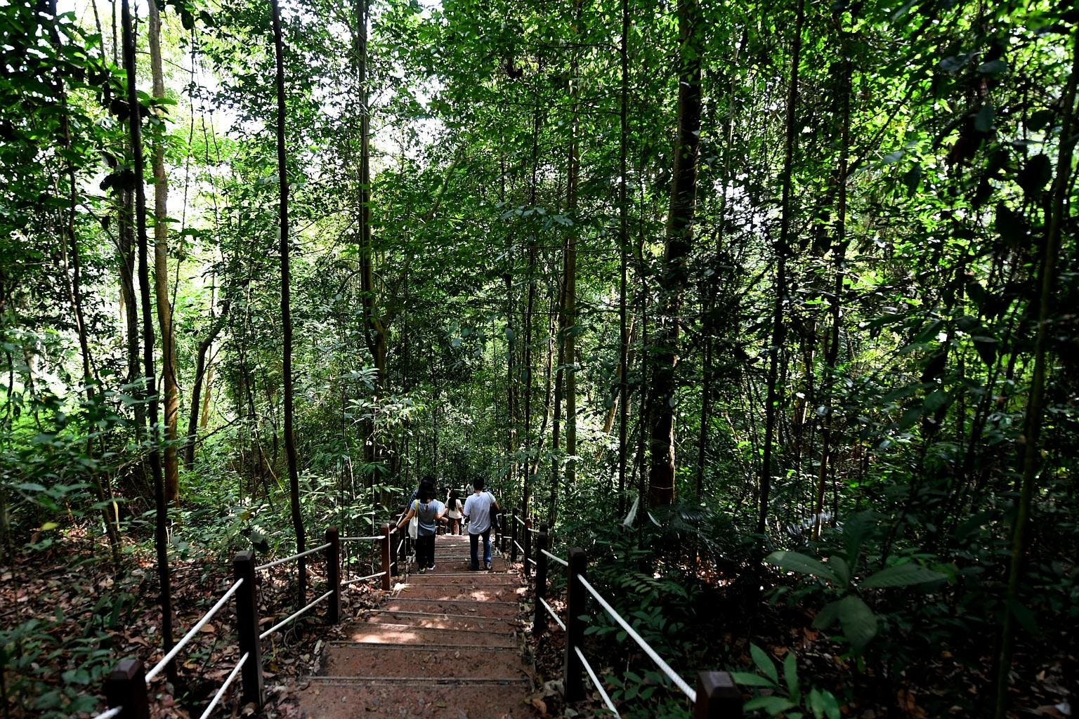 Stop by Bukit Timah Nature Reserve for a relaxing hike