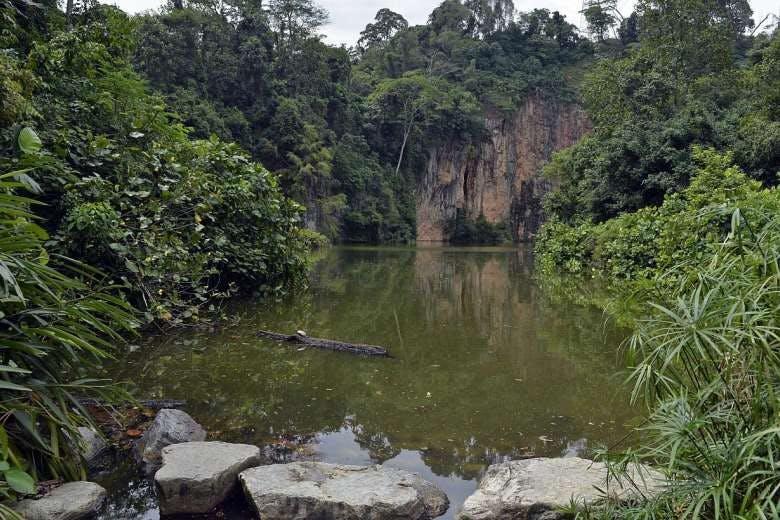 Scenic photograph of Bukit Timah Nature Reserve