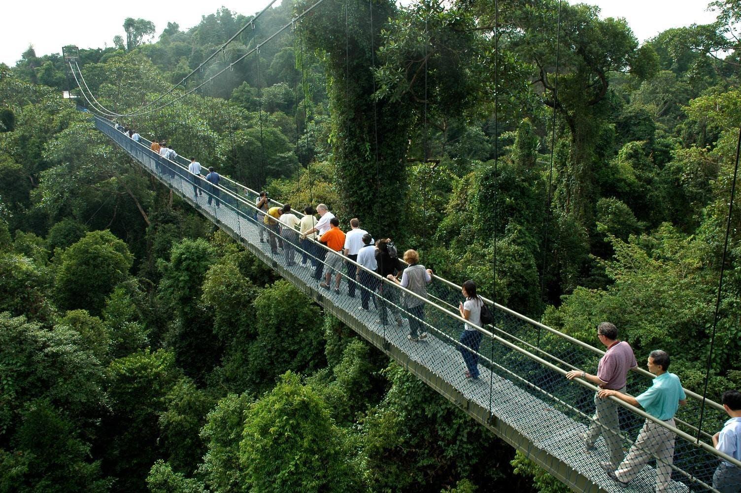 TreeTop Walk Singapore