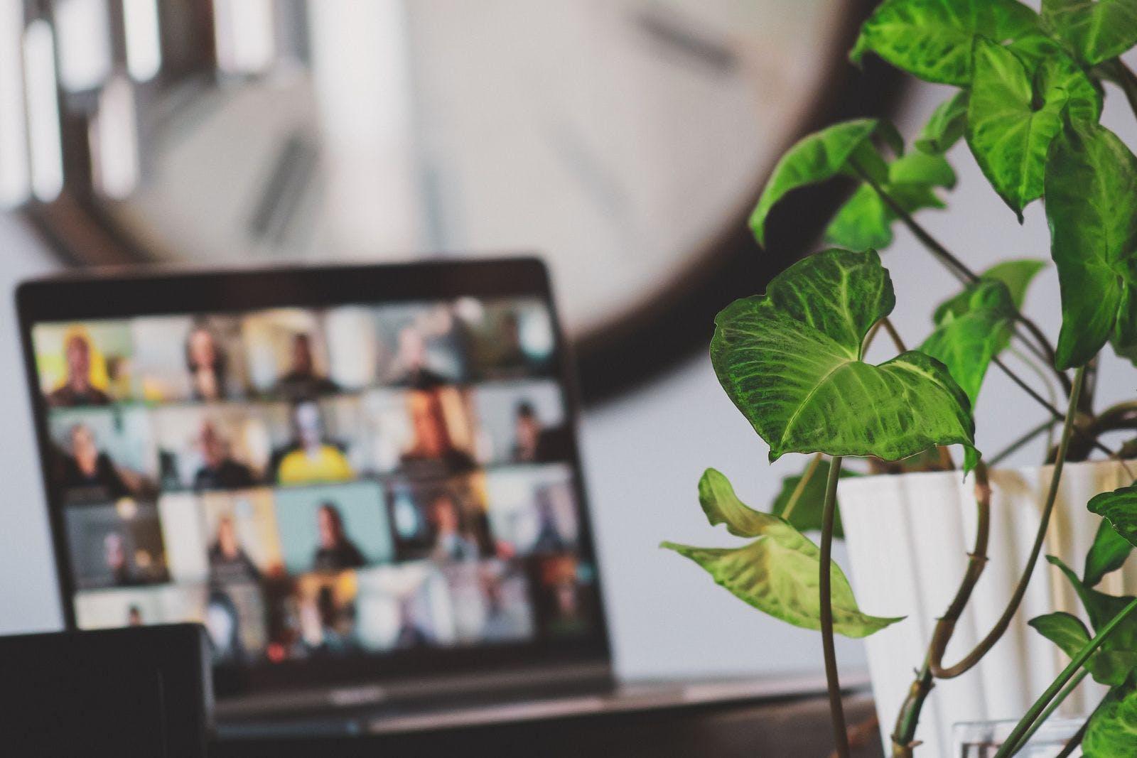 Foto de una planta y una computadora en una llamada grupal