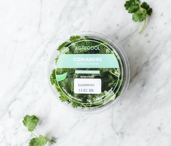 Coriandre Locale, saine, sans pesticides.  Produite par Agricool dans le Grand Paris