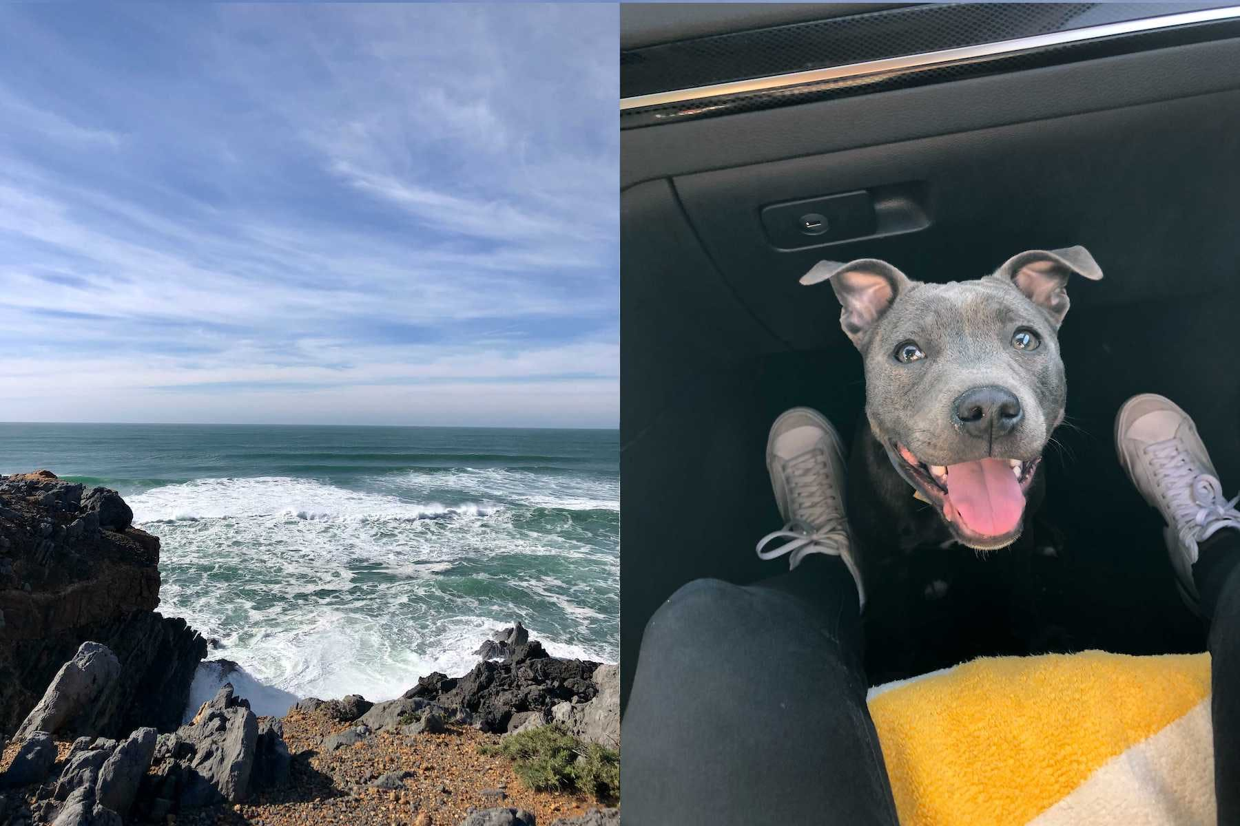 ocean view in one picture and a dog in a car in another