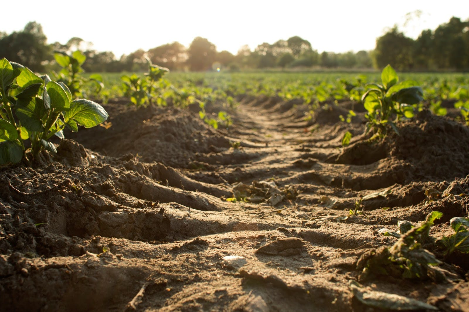a field of a farm