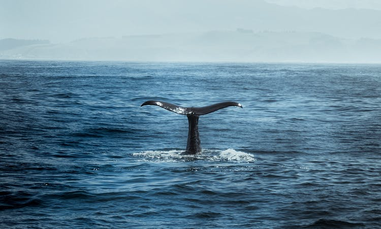 whale in water