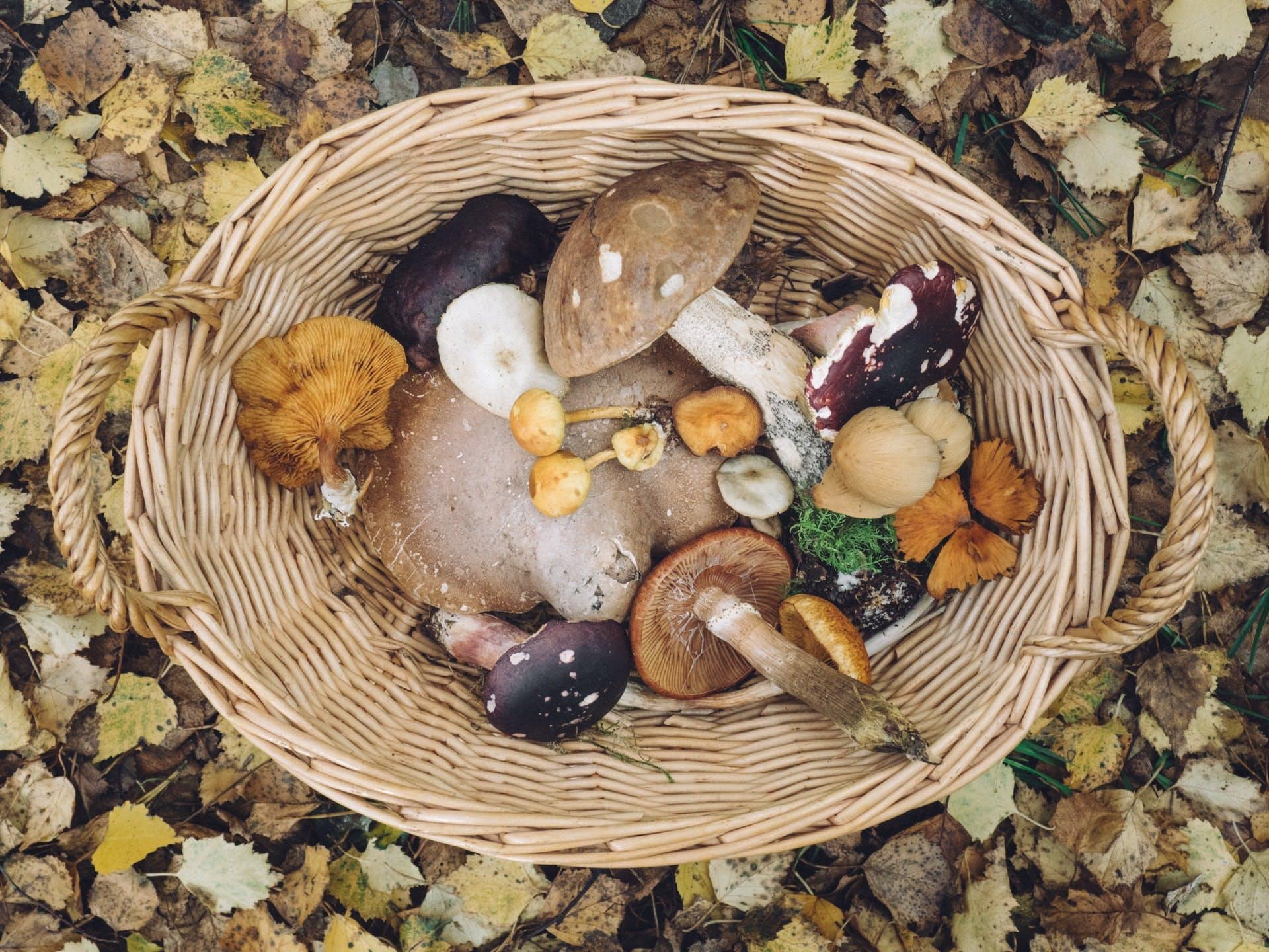hamper of wild mushrooms