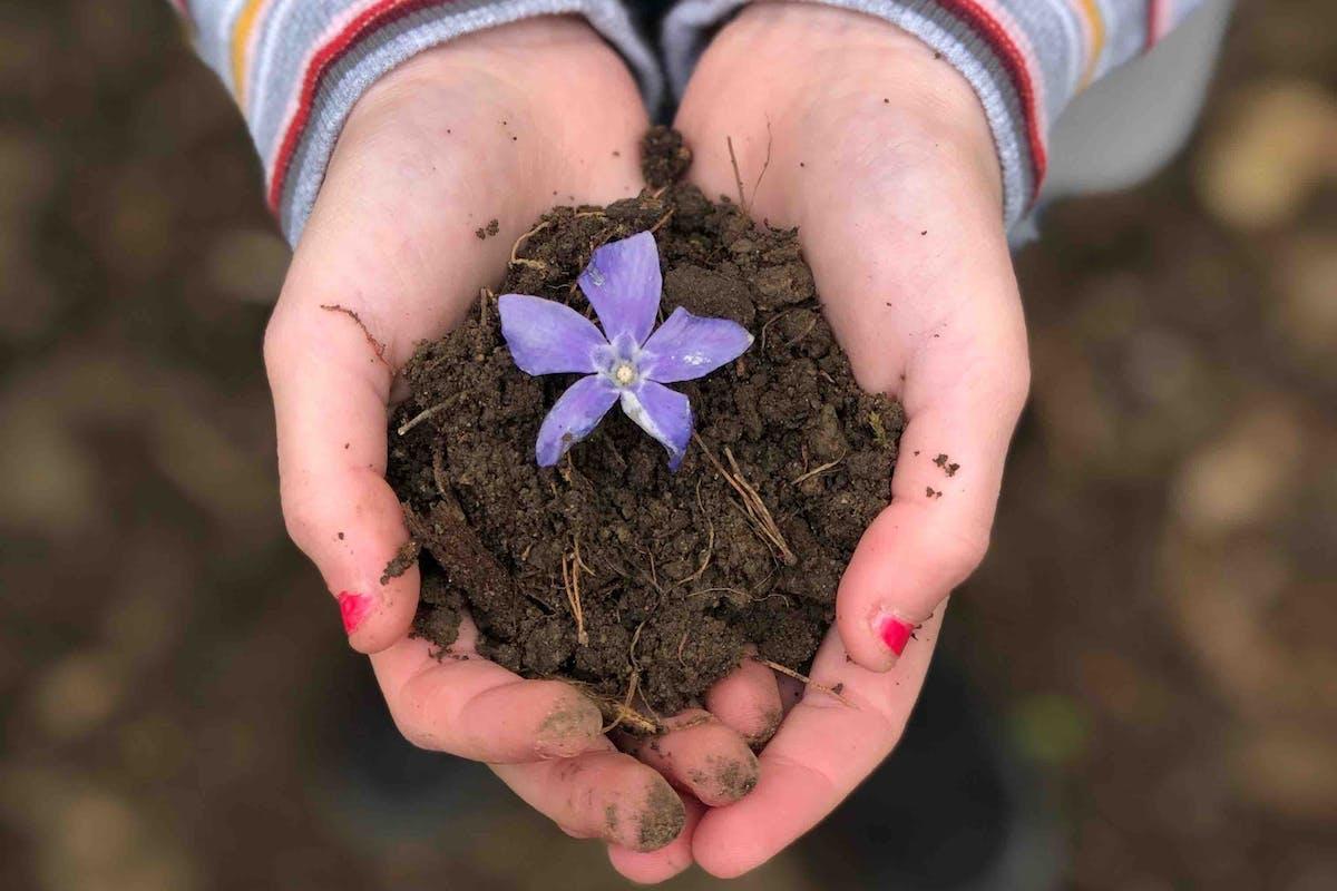 earth soil flower climate