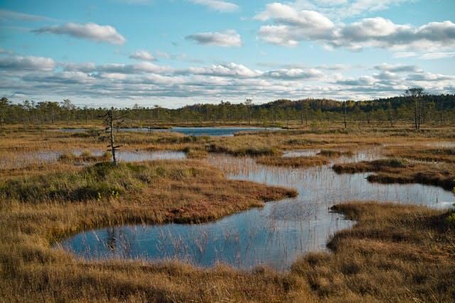 flooded peatland