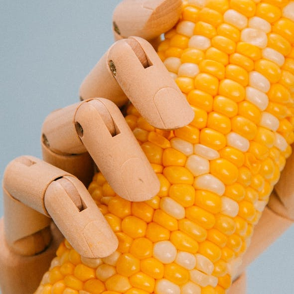 juicy sweetcorn in a wooden hand
