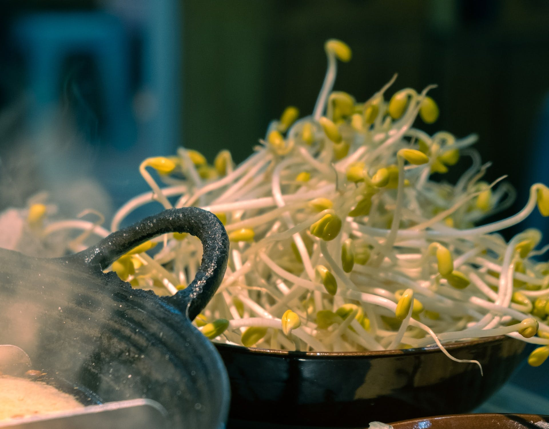 bean sprouts in a kitchen