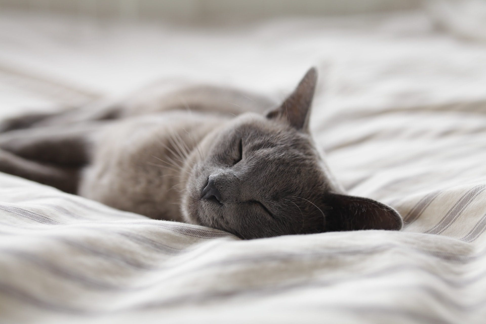 a cat napping