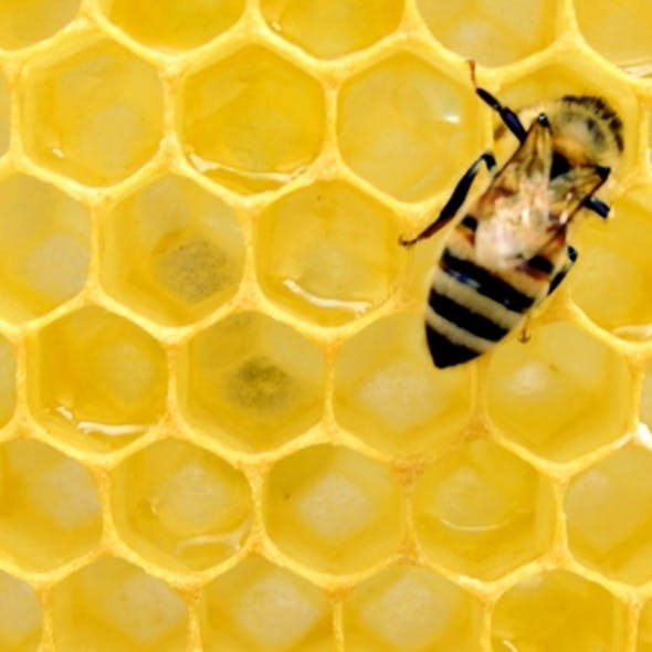 Our Favourite Alternatives to Honey image