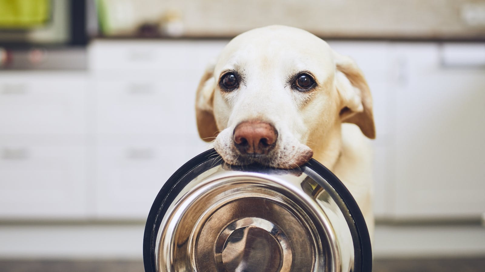 a dog with an empty bowl