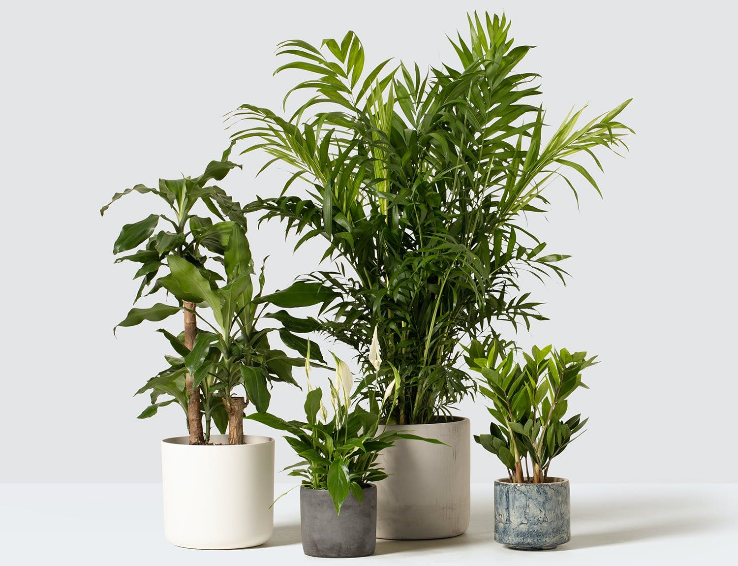 selection of green house plants