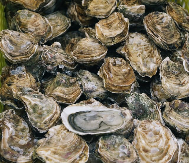 lots of oysters