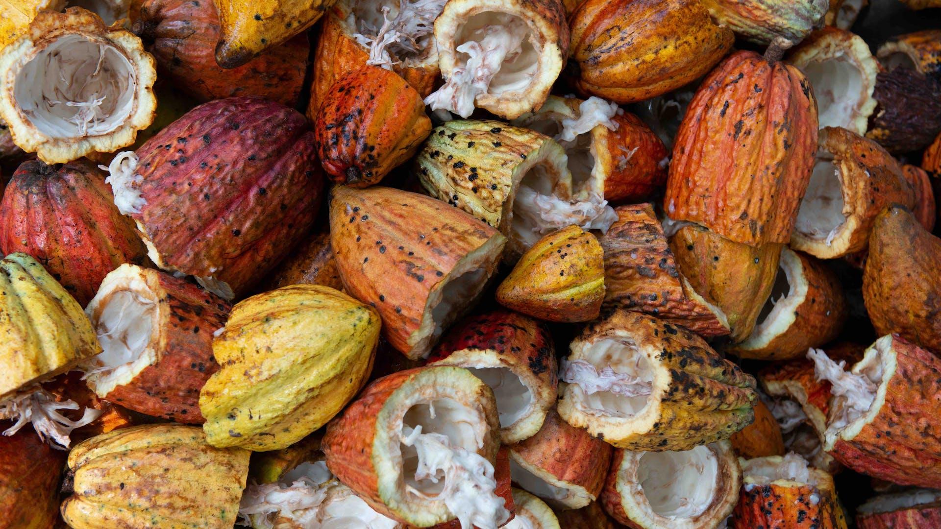cacao husks