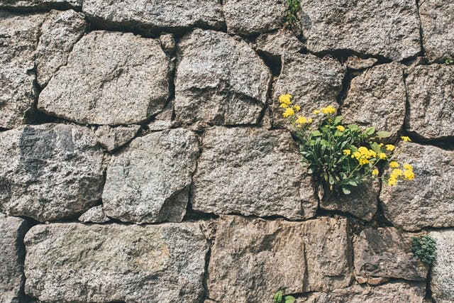 stone wall with plants growing in it