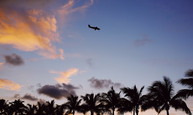 helicopter flying over palm trees
