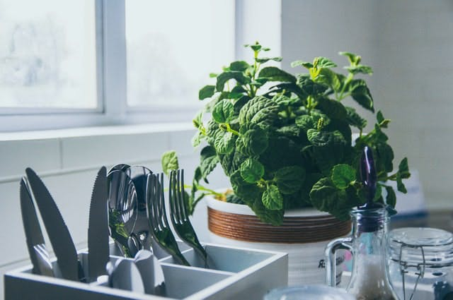 mint plant next to the sink