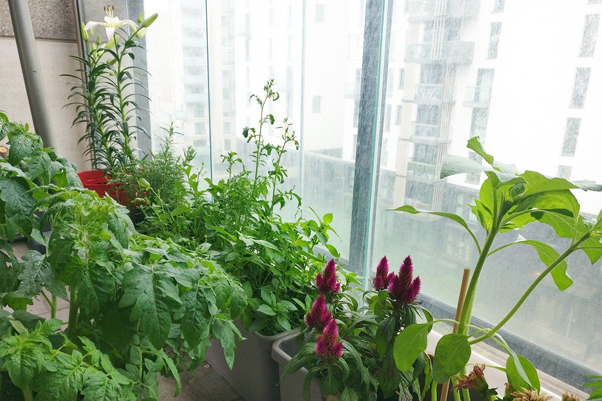 plants-on-covered-balcony