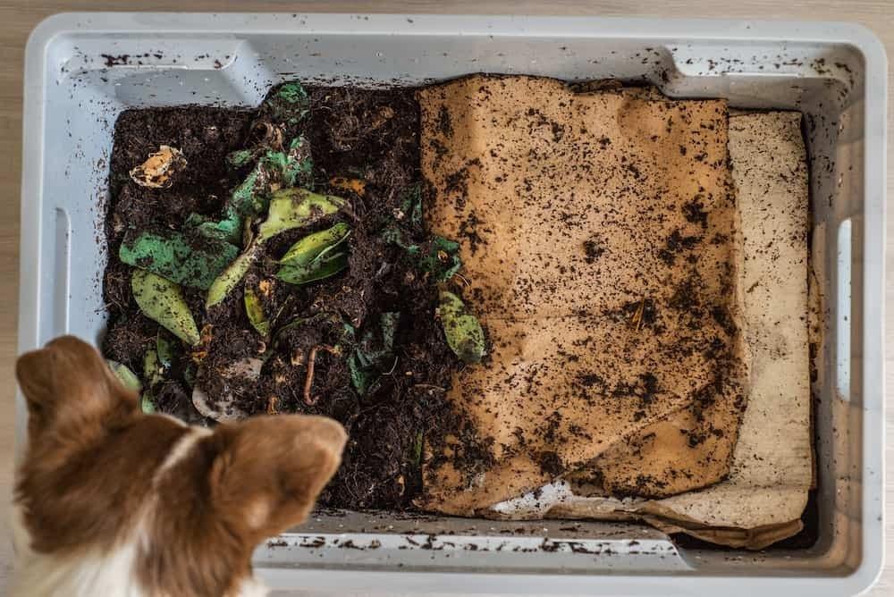 dog and worm farm