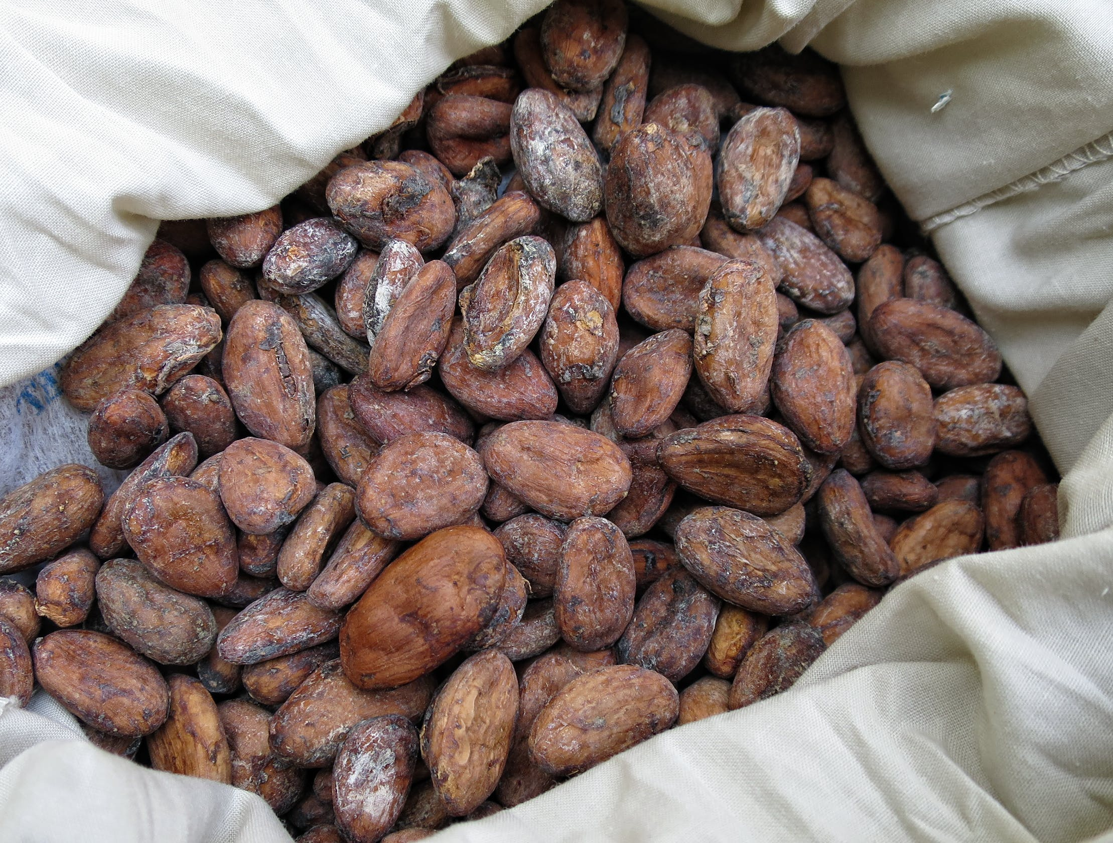 cocoa beans in white cloth