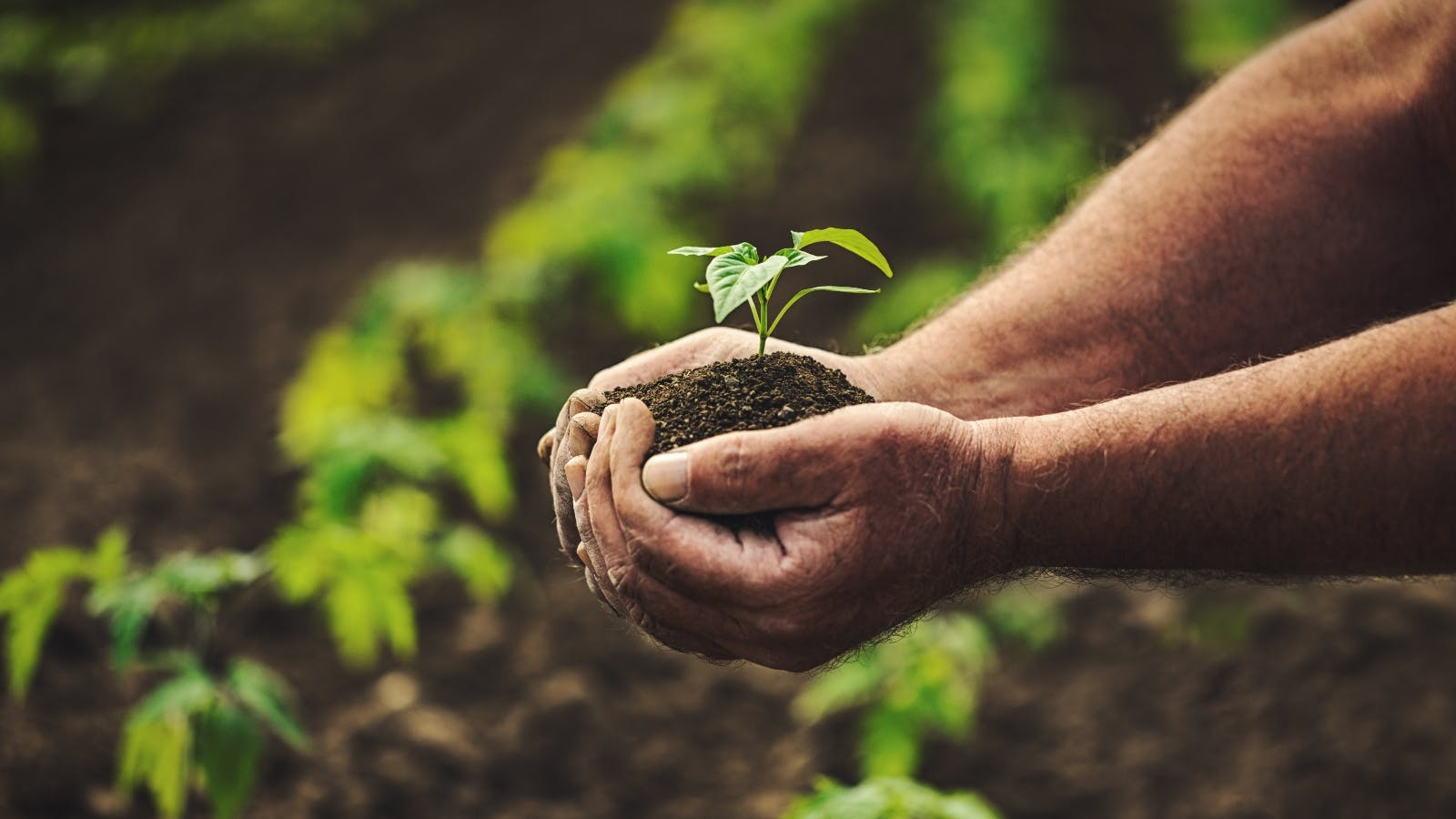 hands holding soil and a plant