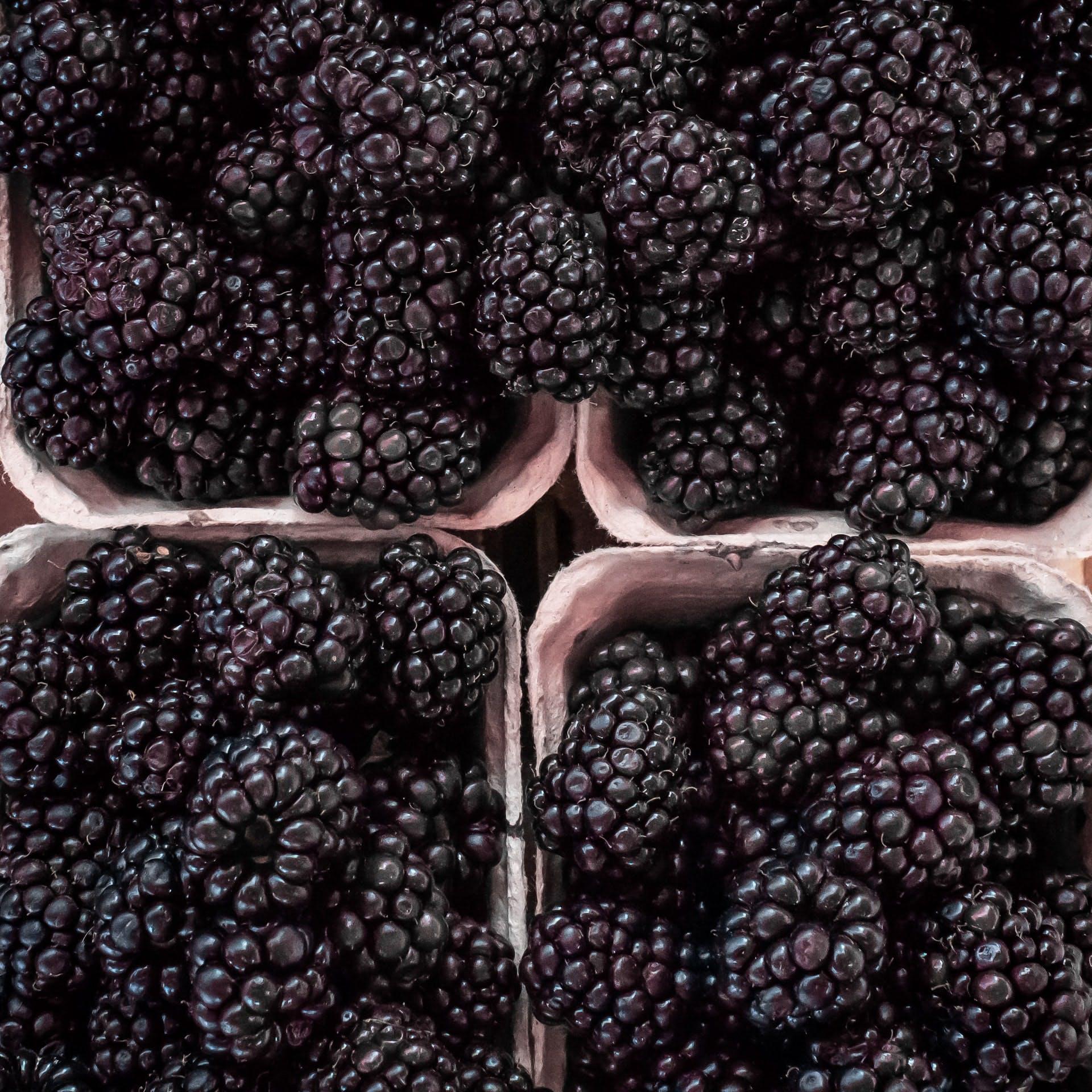 punets of fresh blackberries