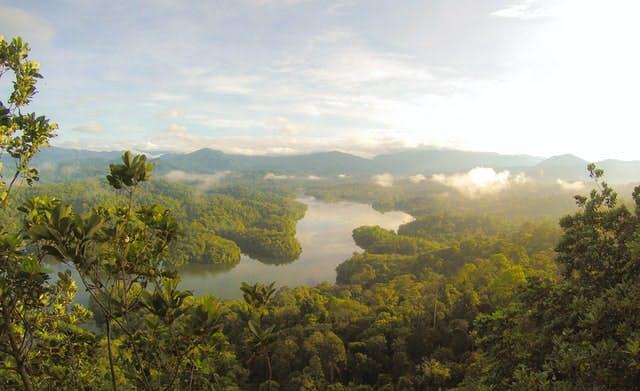 a rainforest view