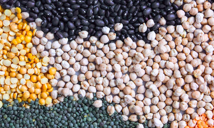 Plant-based Protein: The Ultimate Guide image