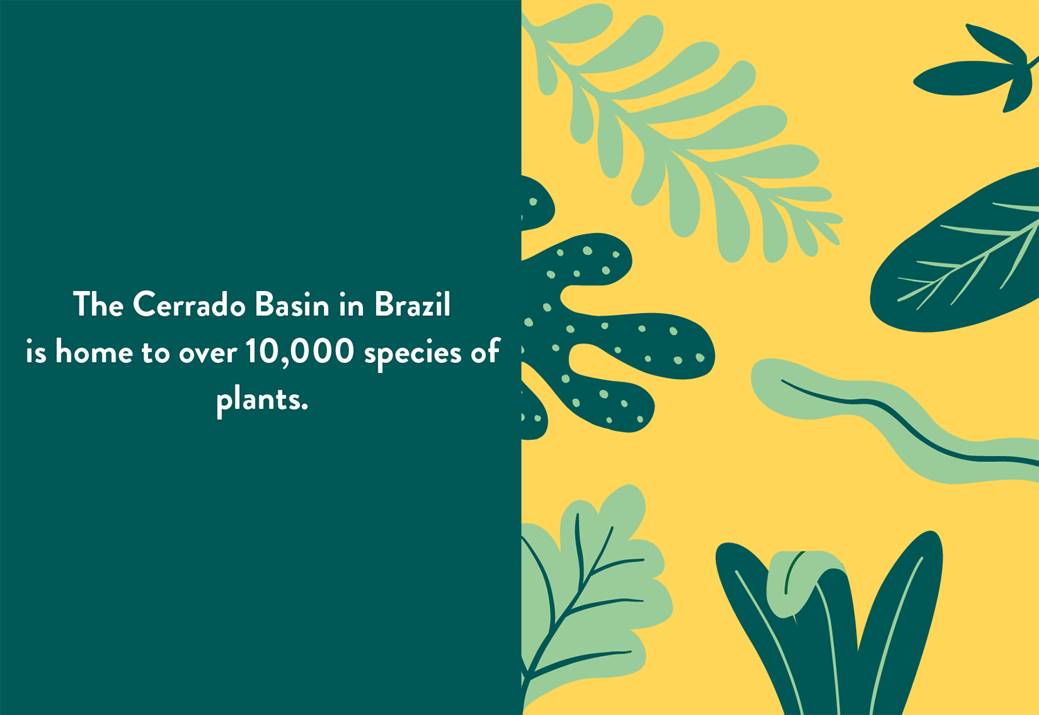 Infographic showing 10,000 species of plants in Cerrado Basin