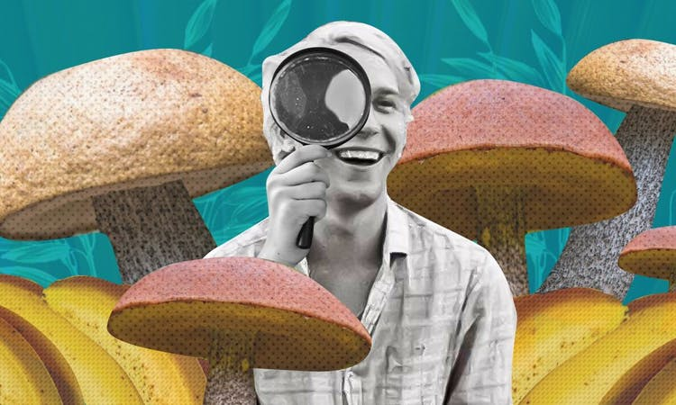 over-sized mushrooms and bananas and a person with a magnifying glass