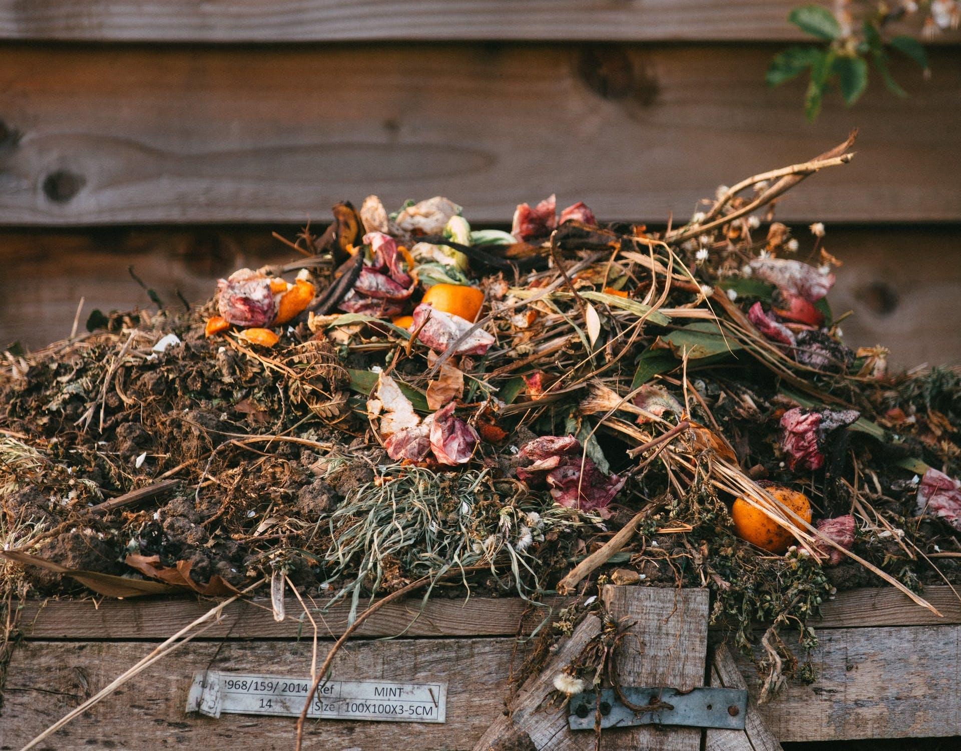 a compost pile