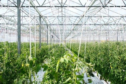 produce growing in a farm greenhosue