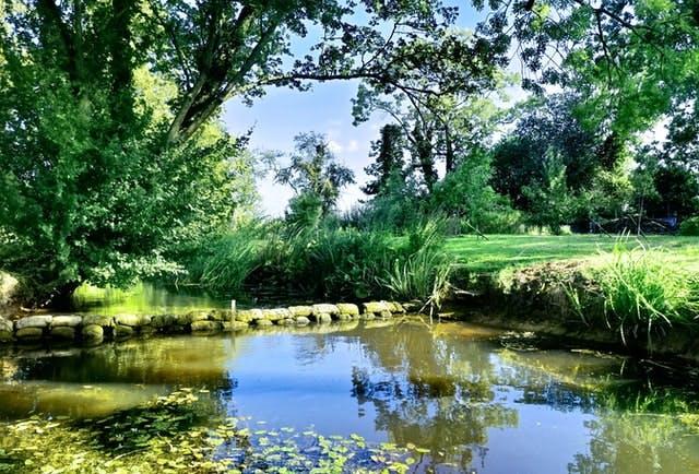 sunny garden pond