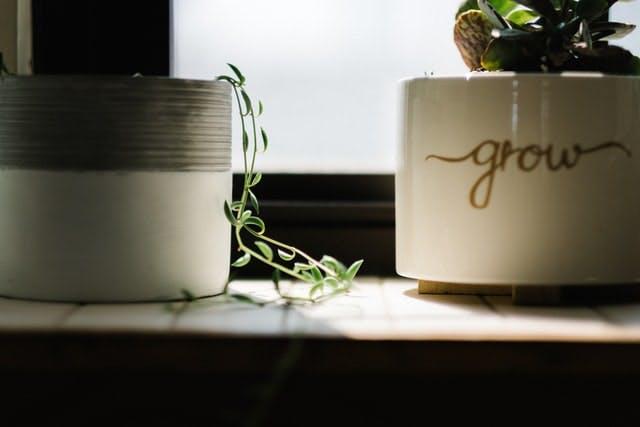 house plants on a shelf