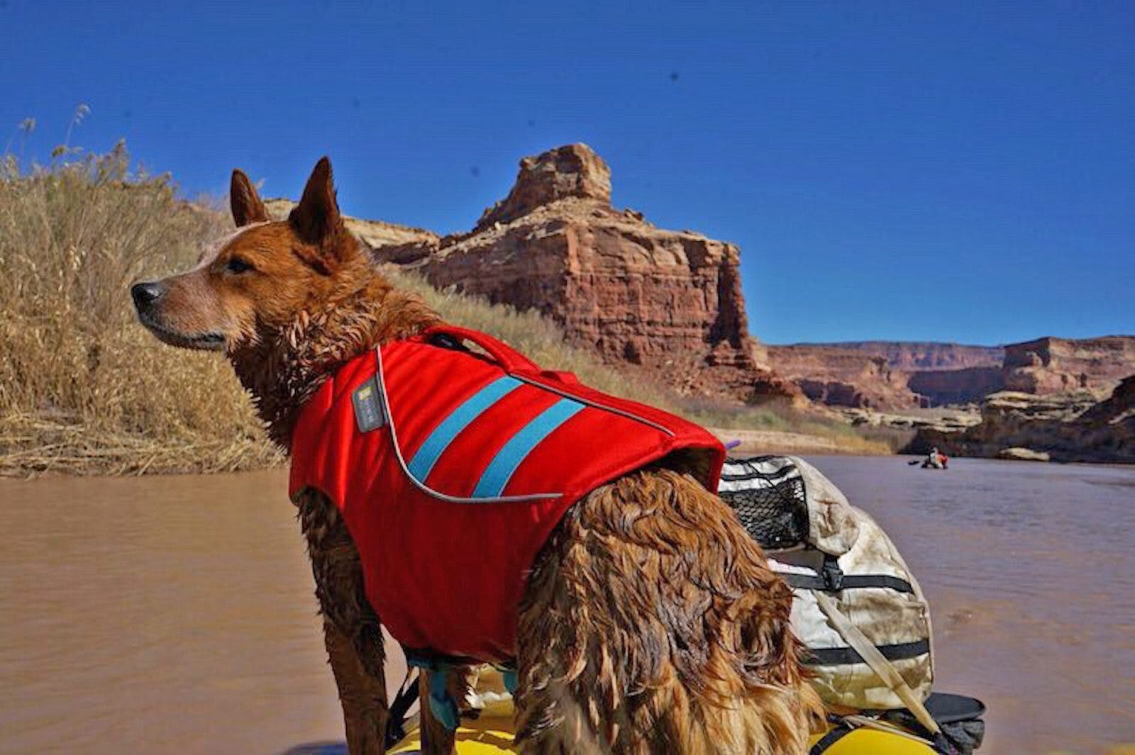 Dog PFDs: How to train your dog to wear a pfd. Photo by Molly Harrison of Sprocket.