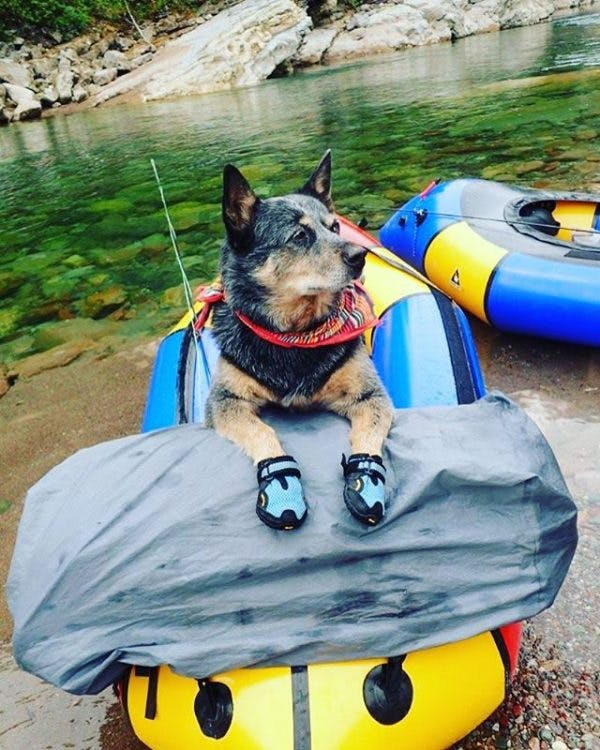 """Runner up: """"My #alpackaraft packraft came in the mail and I couldn't be more excited!!!Here's to hoping that Merlin will be just as laid back on the boat as Badger was,"""" by @strassermonster"""