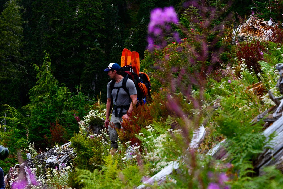 Greg Lewis hiking through the lupine on route to the Queets River.