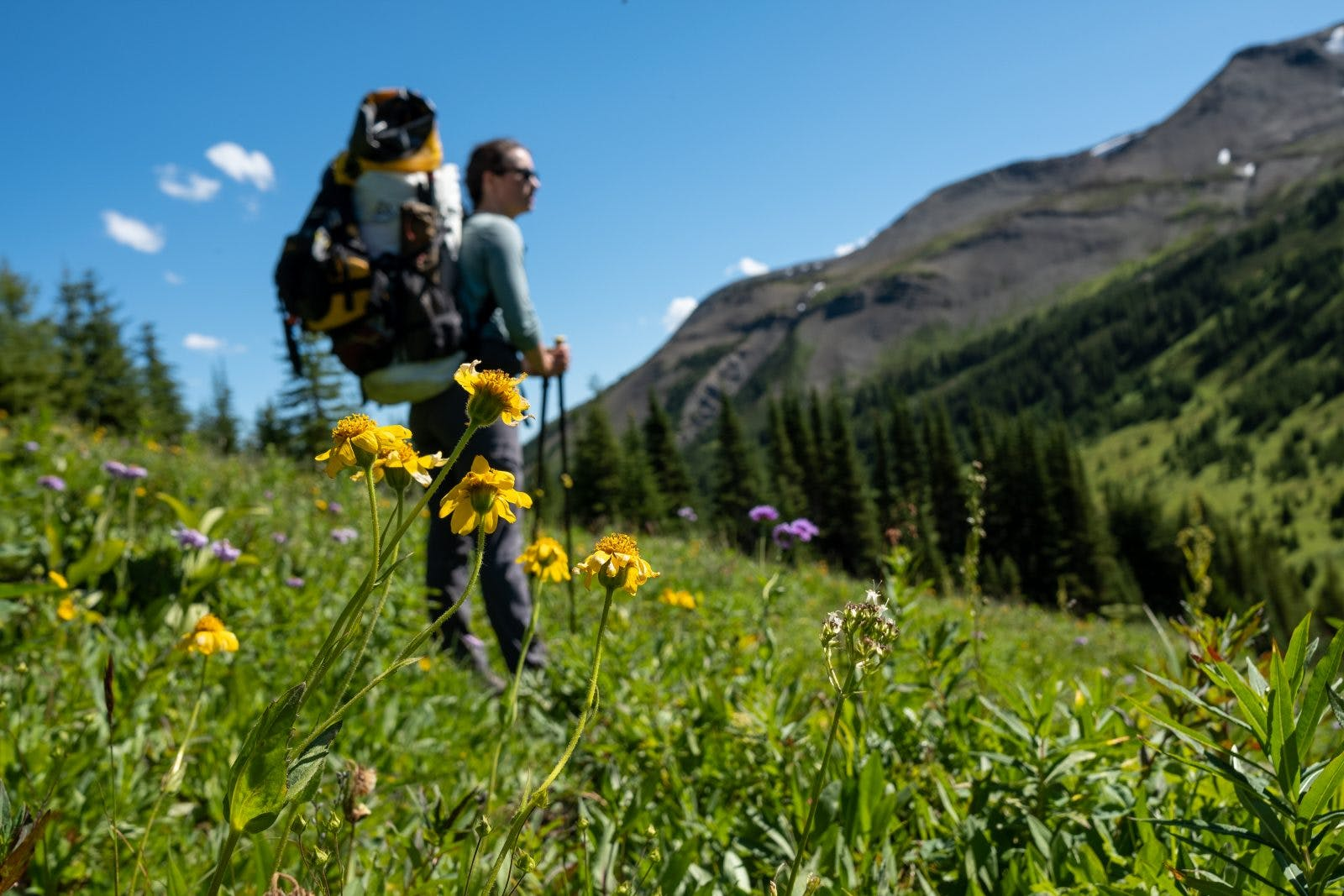 Sub-alpine flowers blooming just before Snake Indian Pass. Photo by Coburn Brown